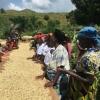 Muungano Cooperative, Processing Congo Coffee Beans