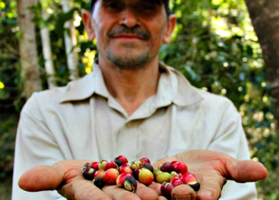 Farmer with Fair Trade Hand Picked Coffee