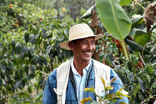 Organic Colombian coffee producer