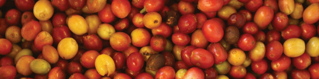 Certified B Corporations Import Fair Trade Coffee Cherries