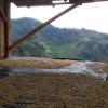 Honey Process Coffee Beans, Peru Huabal