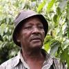Kithinji Kabiru growing Kenyan coffee at Mbeguka Estate Farm