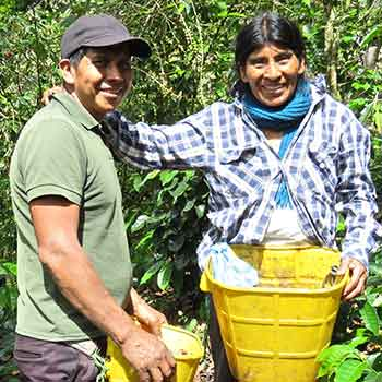 Two farmers harvesting coffee in Colombia Tierradentro